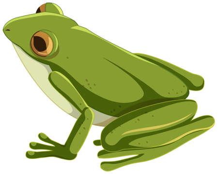 Green frog cartoon character isolated illustration