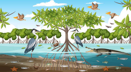 Mangrove forest landscape scene at daytime with many different animals illustration