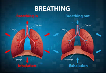 The process of breathing explained illustration