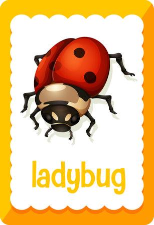 Vocabulary flashcard with word Ladybug illustration