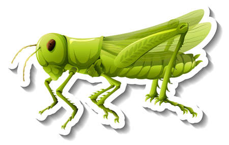A sticker template with a grasshopper isolated illustration