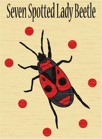 lady beetle: lady beetle
