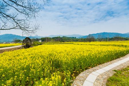 Hongcun Anhui canola flower field scenery Stock Photo