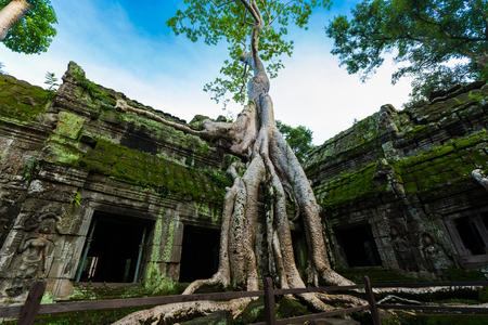 entanglement: Kampuchea Siem Reap Angkor scenery Stock Photo