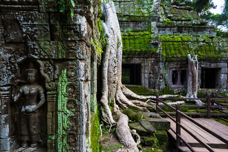 Kampuchea Siem Reap TA Prohm Temple scenery