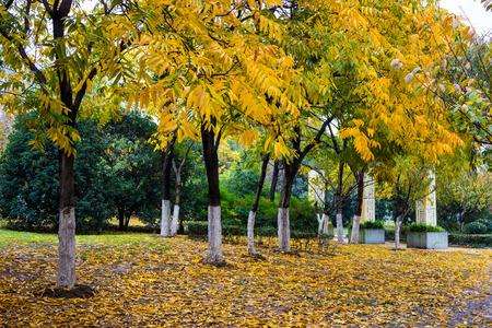 Nanjing Xuanwu Lake scenery in Jiangsu