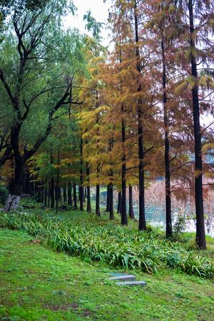 road autumnal: Nanjing Xuanwu Lake scenery in Jiangsu