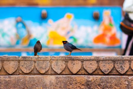 Ganges RIver bird of Varanasi, India