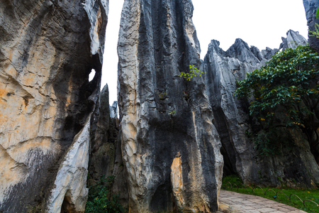 The stone forest scenery in Yunnan, China