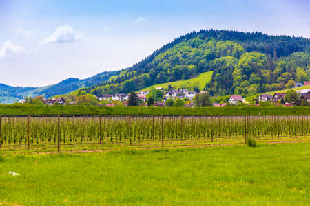 Plantation in the suburbs of Heidelberg, Germany