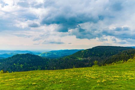 Black forest scenery on the outskirts of Freiburg, Germany