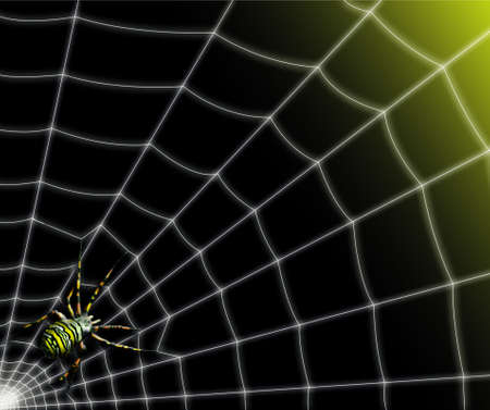 Beautiful spider on its web agiope hornet bright sun against a backdrop of gradation