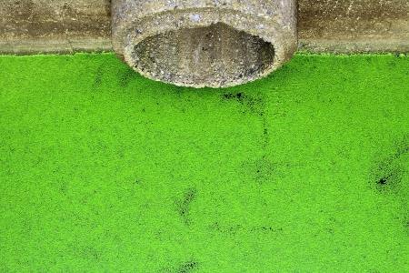 waterspout: Gruppo di area di drenaggio lenticchia d'acqua verde