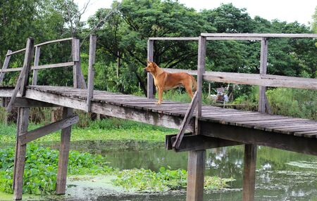 foot bridge: wooden foot bridge