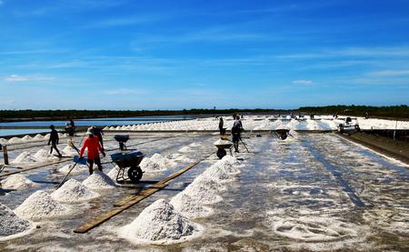 briny: Salt fields
