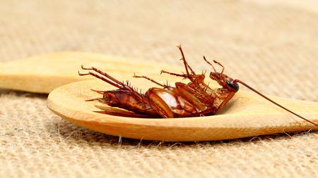 dead cockroach in wood spoon