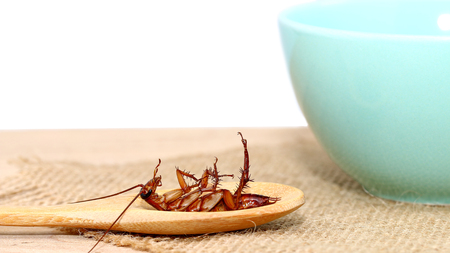 bad hygiene: cockroach in wooden spoon with cup of soup