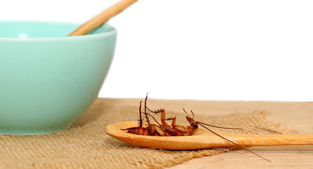 hairy back: cockroach in wooden spoon with cup of soup