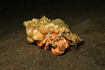 Big colorful crab on the sand bottom. Stock Photo