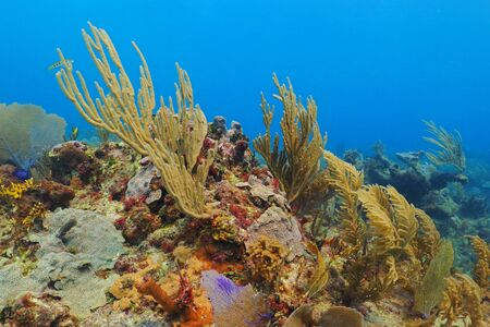 Yellow, purple and red corals and plants on the tropical reef. Light blue water background. Sponges, sea branches and shapes. Peaceful tropical reef scuba diving scenery for holiday. 免版税图像