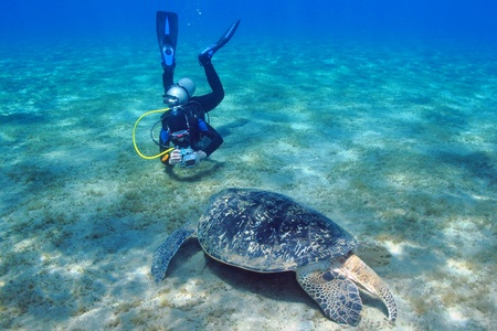 Scuba diver photographer is taking picture of giant turtle. Shallow blue crystal clear water, sandy grass bottom.