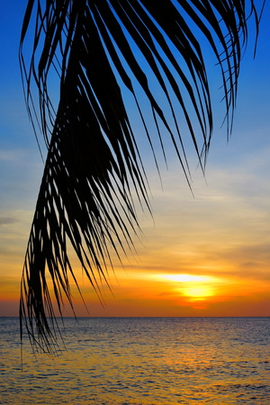 Leaf of coconut palm tree, exotic sea, and the sun and clouds above the ocean. 免版税图像