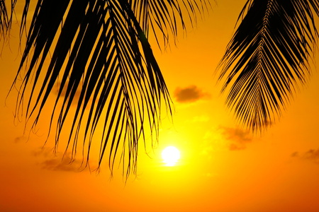 Tropical palm tree leaves and orange yellow sunset.