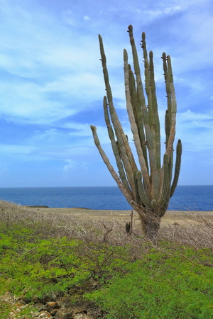 Cactus, rocky coastline and the sea and cloudy blue sky in the background.