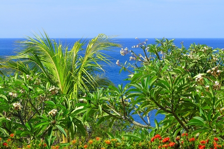 View over the tropical green plants and flowers. Exotic coastline with palm tree, vegetation and calm blue ocean. 免版税图像