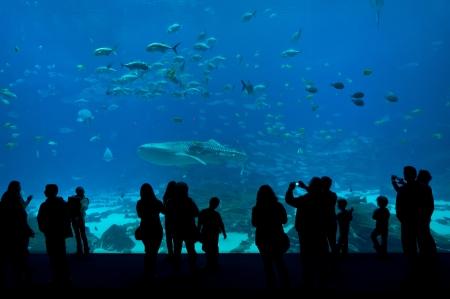 The picture captures the people in Aquarium