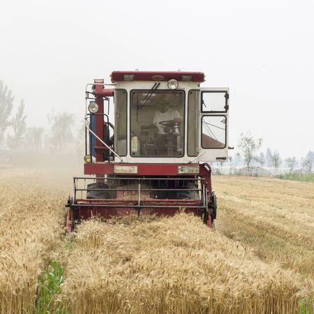 harvesters: Harvesters is in field