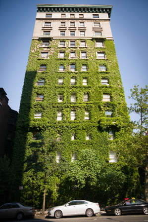 Tall NYC building covered with green ivy.