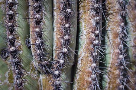 Macro shot of sharp green cactus Stock Photo