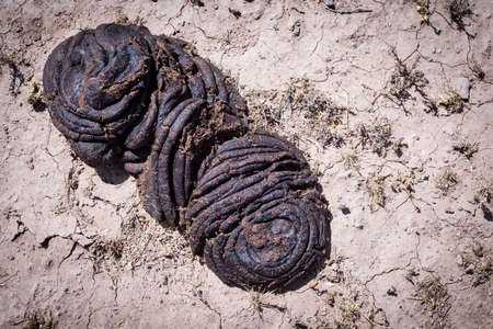 feces: Bull feces waste on brown ground Stock Photo