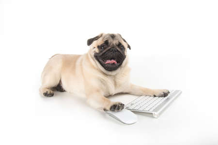 Dog with computer keyboard. Funny dog using computer keyboard and mouse while isolated on white