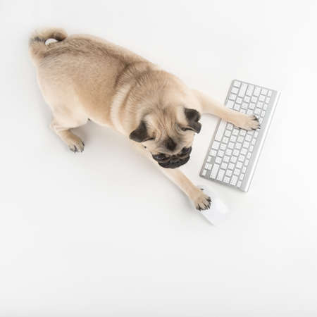Dog with computer keyboard. Top view of funny dog using computer keyboard and mouse while isolated on white photo
