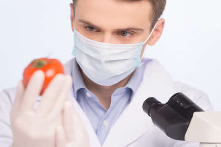 genetically modified: man looking at tomato and wearing mask. Cell culture assay to test genetically modified vegetable Stock Photo