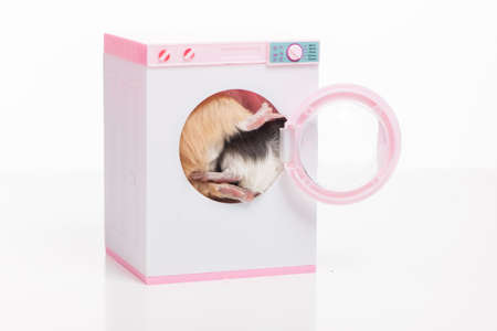 hamsters: Funny hamsters sitting in washing machine. two masters inside washing machine Stock Photo