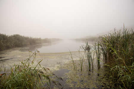 morass: swamp view wtih lakes and footpath Stock Photo