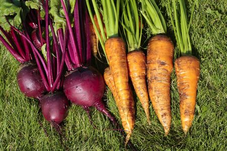 Bunch of carrots and beetroot on ground