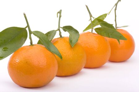 Row of tangerines isolated on white photo