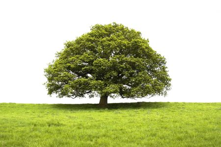 Tree and field isolated on white background