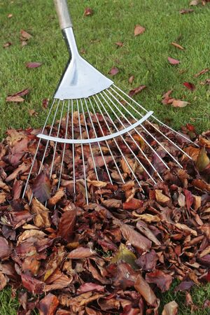 Pile of autumn leaves and rake on lawn