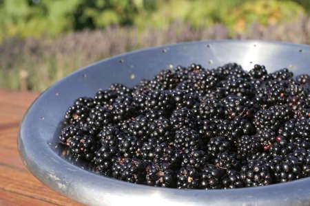 black currants: Bunch of ripe  Black currants