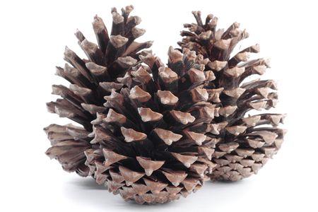 pinecones: pinecones in autumn over white