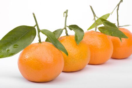 Row of tangerines closeup isolated on white photo