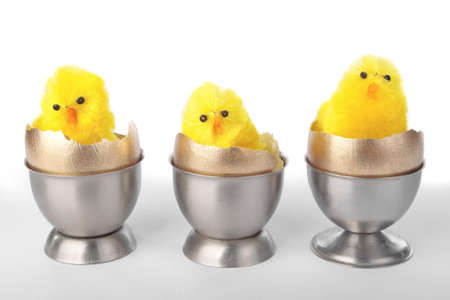 Easter chicks on egg cups over white background photo