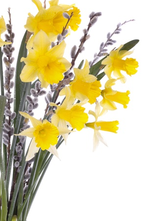 Spring daffodil flowers isolated over white background Stock Photo