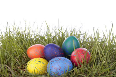 Colored easter  eggs on grass over white background photo