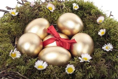 huevos de oro: Los huevos de oro en aves anidan sobre fondo blanco Foto de archivo